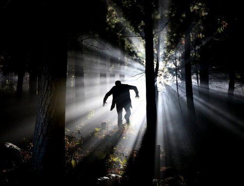 monstre dans la forêt