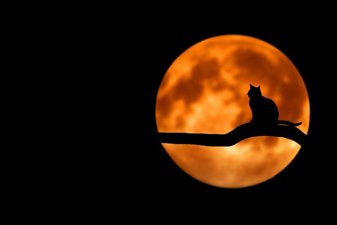 Chat à la pleine lune
