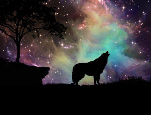 Le vieux loup