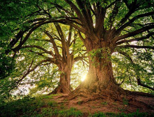 Au pied de mon arbre